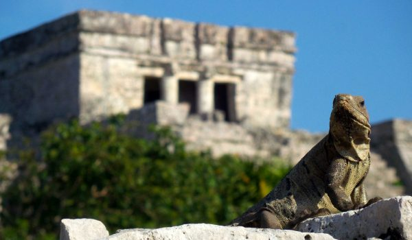 Ruta Maya 5 – Day of the Iguana