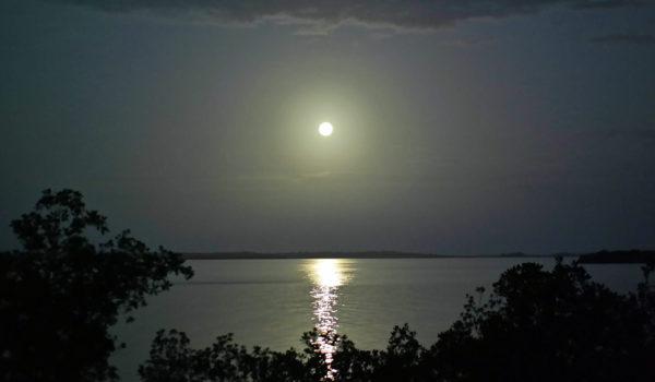Moonrise Gingdom