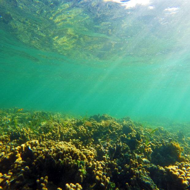 Jinja-Reef-01