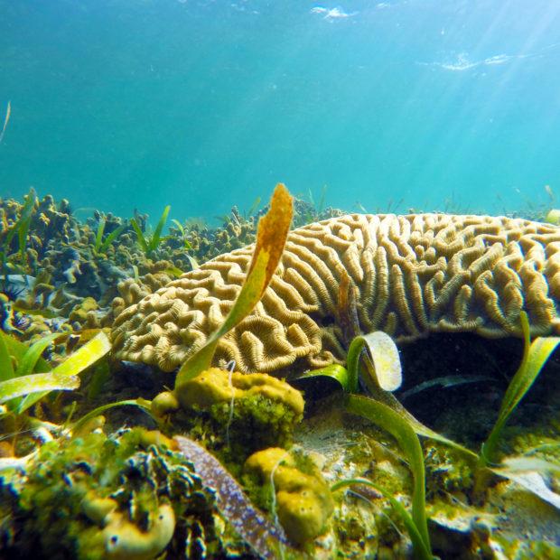 Jinja-Reef-03