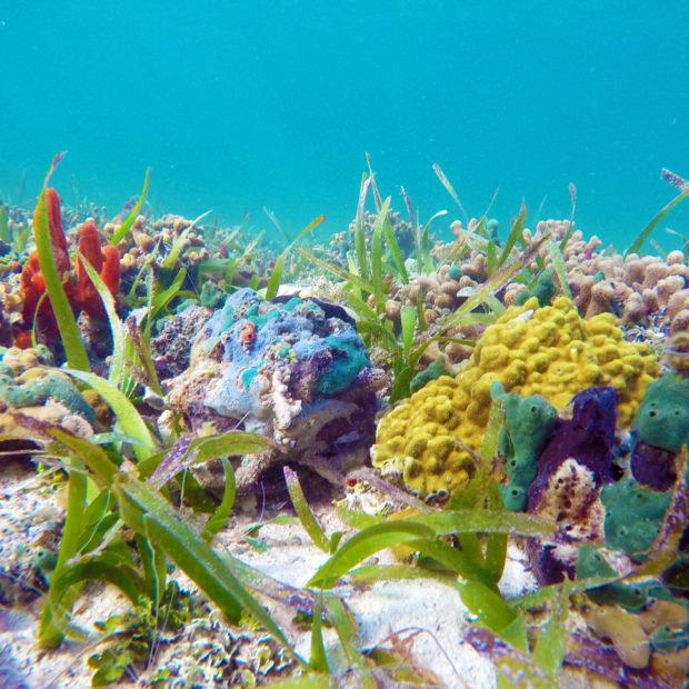 Jinja-Reef-04