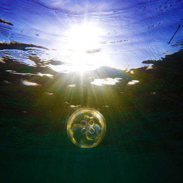 Jinja-Reef-05