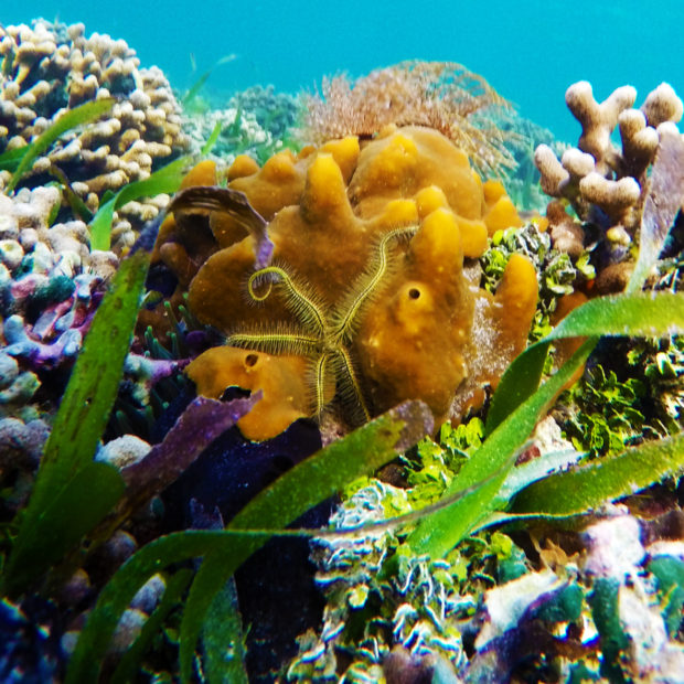 Jinja-Reef-07-1