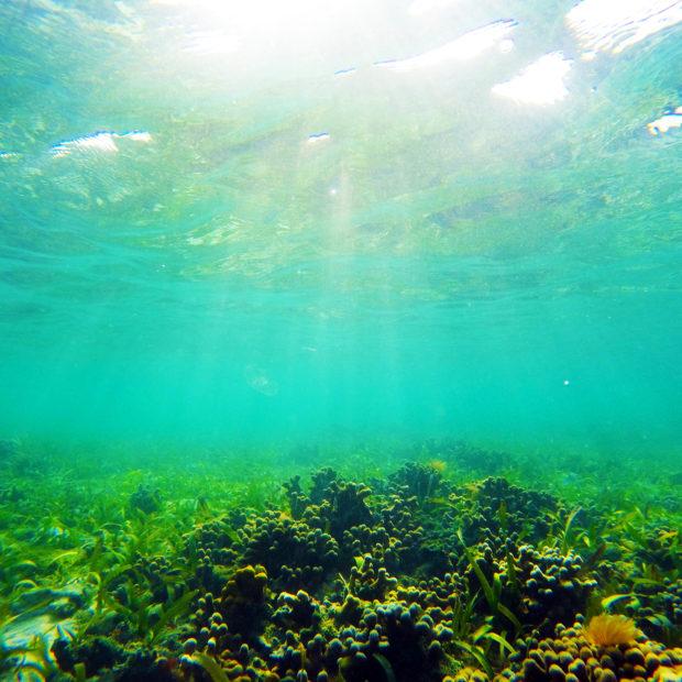 Jinja-Reef-08