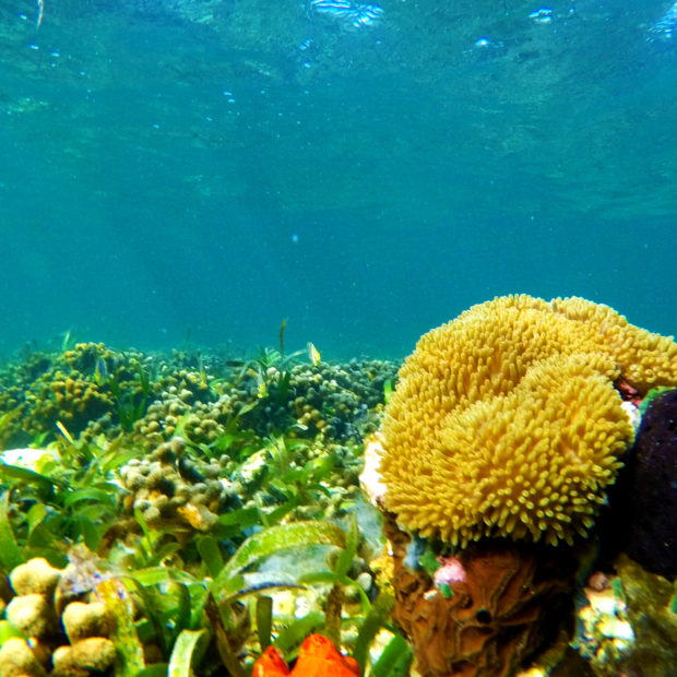 Jinja-Reef-09