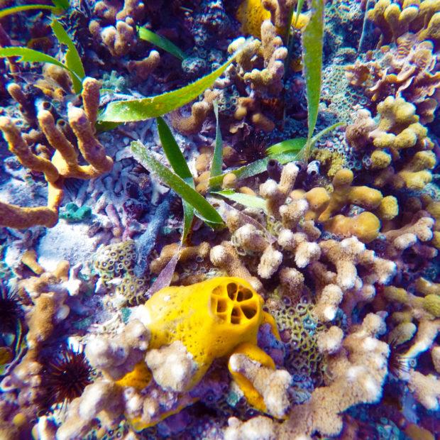 Jinja-Reef-11