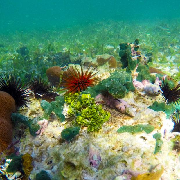 Jinja-Reef-14