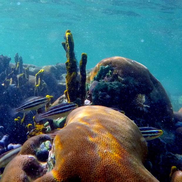 Jinja-Reef-15-1