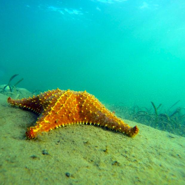 Jinja-Reef-16
