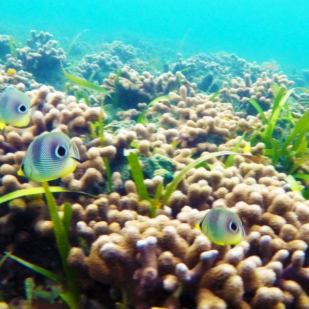 Jinja-Reef-19